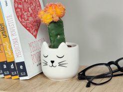 Minighiveci pisică